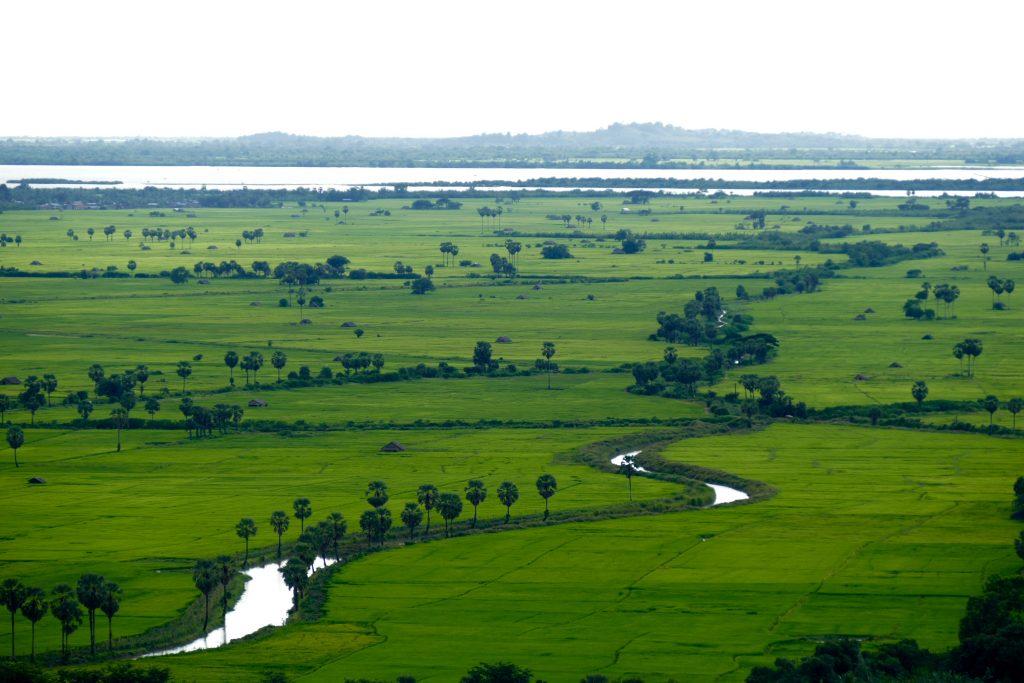 Myanmar, des rizières, toujours des rizières