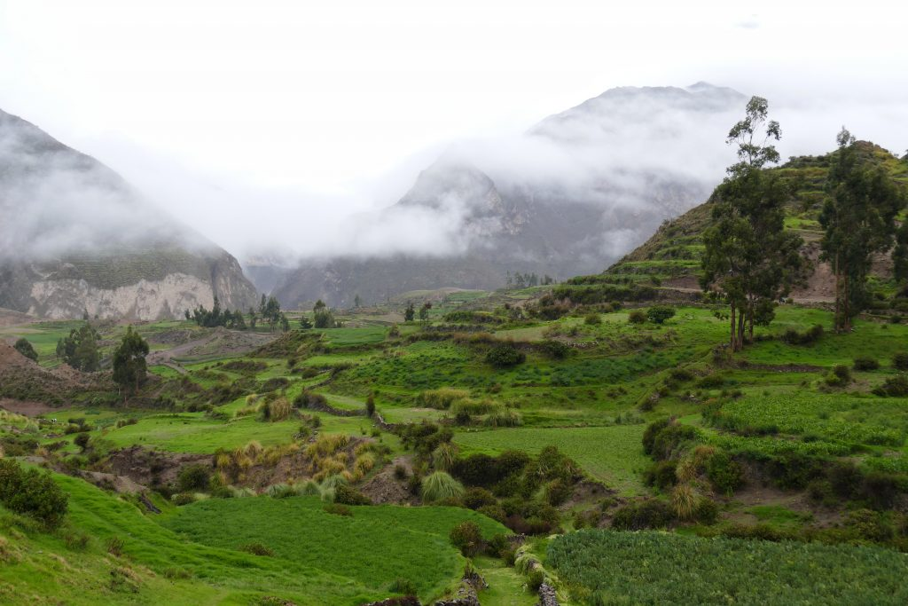 Peru, the Colca Canyon