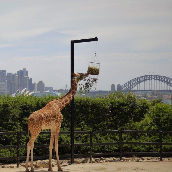 Australia, Sydney Taronga Zoo
