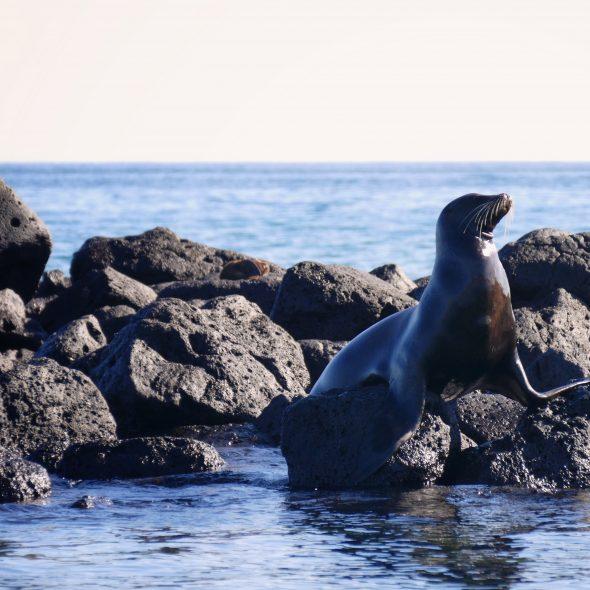 Ecuador, sea lion @ Galapagos